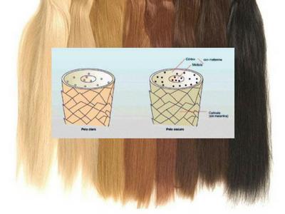 tipos de color por la melanina