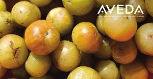 El amla de Aveda proviene de una pequeña granja en Sangli, India.