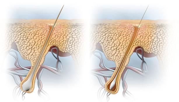 tratamiento senescencia con invati de aveda