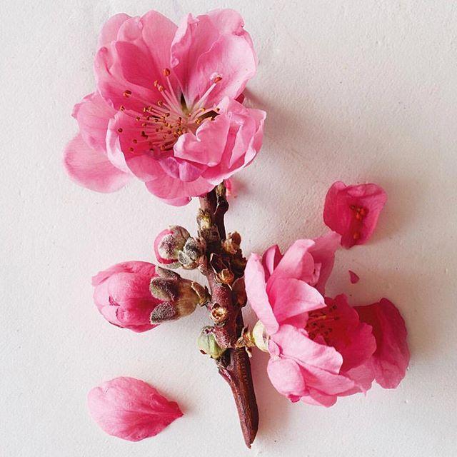 cherry almond aveda