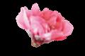 separador flor almendra
