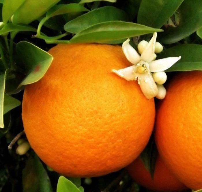 aroma mandarina y jazmín