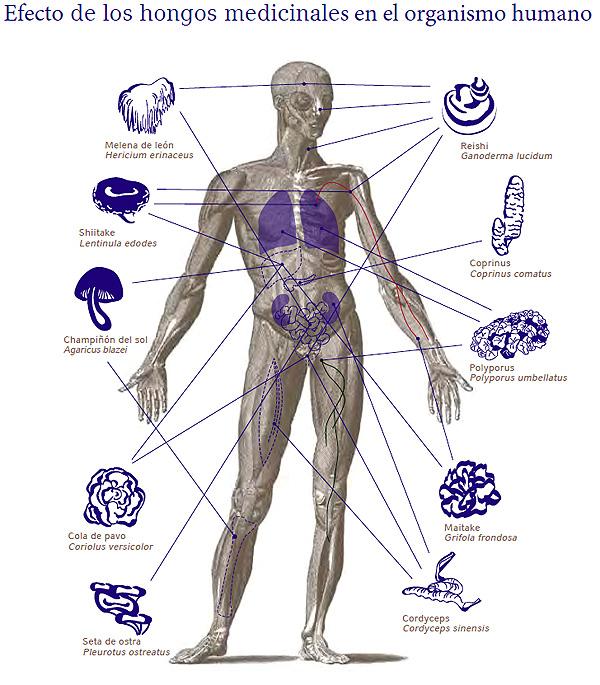 Setas terapeutas para cuerpo humano
