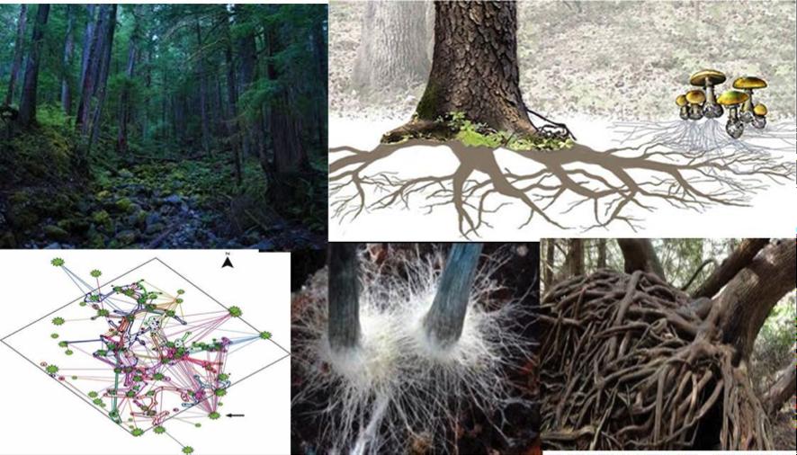 micelius, terapia setas y hongos